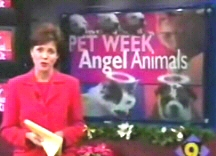 Angel Animals News Featured
