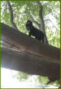 A Dog Named Leaf in a Tree